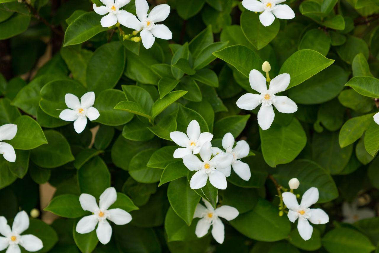 Planificar su jardín de flores de primavera