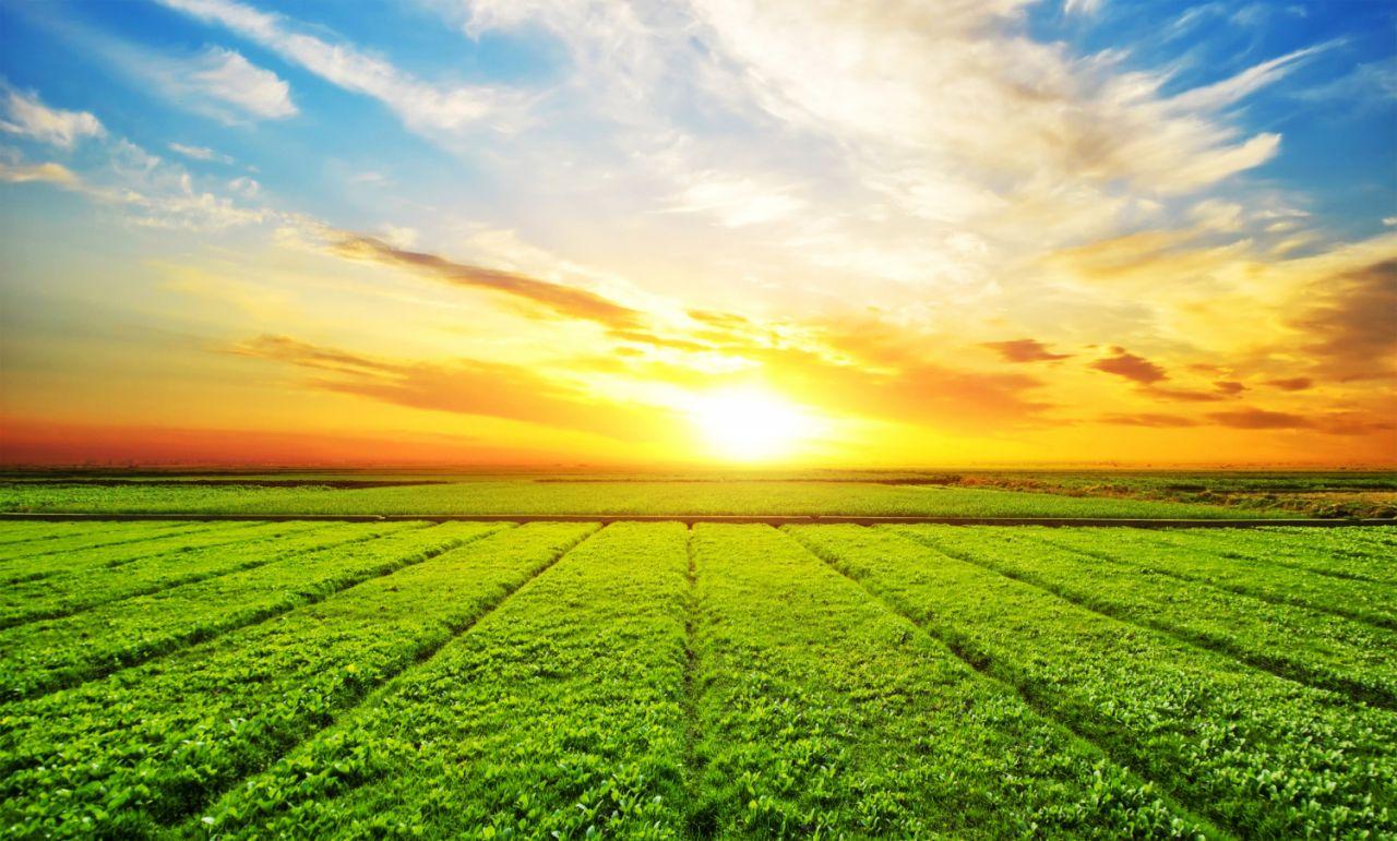 Οι νόμοι που διέπουν την κατασκευή γεωργικών εκτάσεων