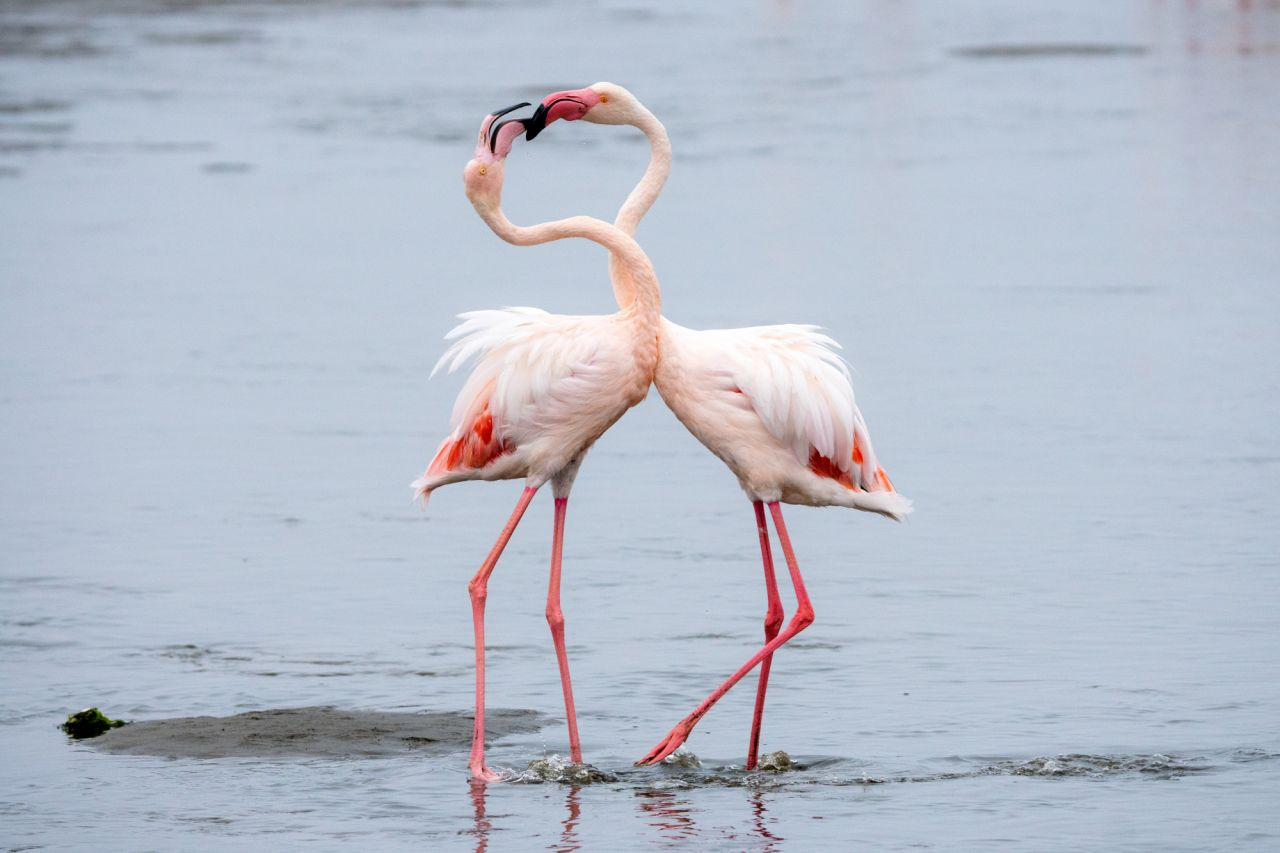 Flamingos in Larnaka