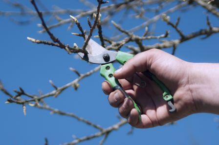 Il est temps de commencer à élager vos arbres